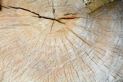 Old tree with annual rings Royalty Free Stock Images