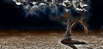 Old Tree. In arid land royalty free illustration
