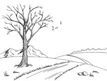 Old tree autumn graphic art black white landscape sketch illustration. Vector Royalty Free Stock Photography
