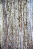Old tree background Royalty Free Stock Photos