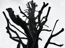 Old tree with bare branches Stock Image