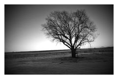 The Old Tree Royalty Free Stock Photography
