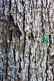 Old tree bark Royalty Free Stock Images