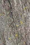 Old tree Bark Royalty Free Stock Image