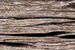 Old tree bark Stock Photography