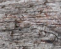 Old tree bark background Royalty Free Stock Image