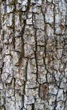 Old Tree Bark Background Stock Photos