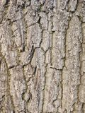 Old tree bark background Royalty Free Stock Photography