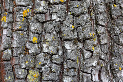 Old tree bark background Royalty Free Stock Photos
