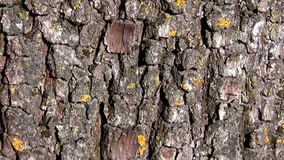 Old tree bark, camera moves up. Camera moves up old tree bark showing it's rich texture stock video footage