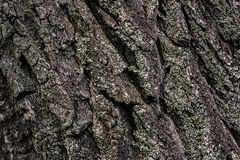Old tree bark close up. Relief bark of an old tree close-up background Royalty Free Stock Photos