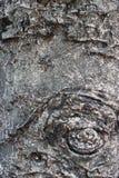 Old tree bark closeup texture. Tree peel surface. Obsolete oak tree bark rustic banner template. Weathered tree bark Stock Image