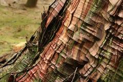 Old Tree Bark Stock Photos