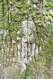 Old tree bark with green meadow as a natural background. royalty free stock photos