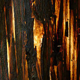 Old tree bark, illuminated texture. Natural material Stock Photos