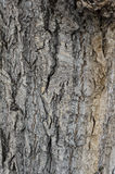 Old tree bark. Industrial background Royalty Free Stock Images