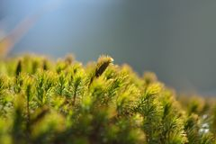 Old tree bark with moss Royalty Free Stock Photos