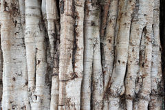 Old tree bark natural texture background Stock Image