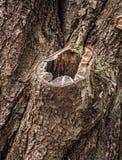 Old tree bark Stock Image