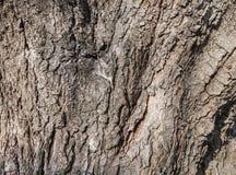 Old tree bark Stock Photo
