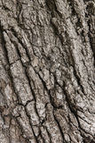 Old tree bark Stock Photos
