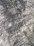 Old tree bark for natural textured background Stock Images