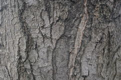 An old tree bark Stock Photography