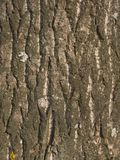 Old tree bark texture Stock Image