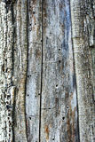 Old Tree Bark Texture. Extreme close-up of the grain bark of dead tree Stock Image