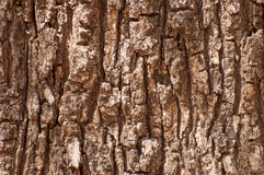 Old tree bark background Stock Images