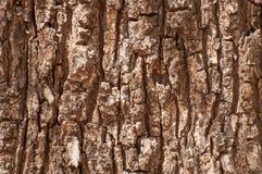 Old tree bark background Stock Images
