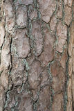 Old tree bark Stock Image