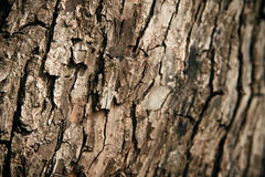Old tree bark texture Stock Images
