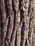 Old tree bark Stock Photography