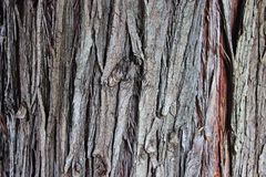 Old tree bark. Texture detail close up Stock Images