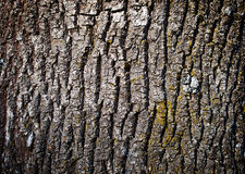 Old tree bark texture Stock Photography