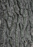 Old Tree bark texture. Tree bark texture with embossed pattern Royalty Free Stock Photos