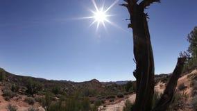 Old tree base in desert landscape. Video of old tree base in desert landscape stock video