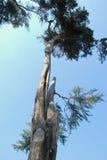 Old tree Stock Photos