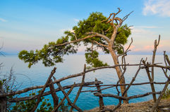 The old tree bending over the sea coast Stock Images