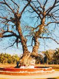 The old tree at bhagerhatl. Beautiful in  Bangladesh Royalty Free Stock Image