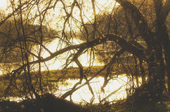 Old tree branches in evening stock photography