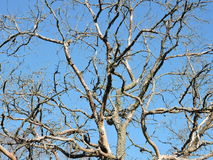 Old tree branches pattern Stock Photography