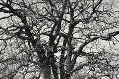 Old tree branches Stock Images