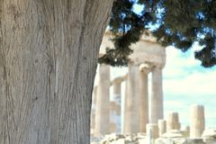 Old tree with Parthenon in the background. Old tree with branches on a sunny day, with Parthenon in the background stock photography