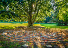 Old Tree Brick Circle Maze. Setting sun filters through big elm tree and shines on a spiral maze made of bricks Royalty Free Stock Photos