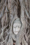 Old tree with buddha head Royalty Free Stock Photography
