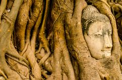 The Old tree and Buddha stone sculpture. Ayutthaya Royalty Free Stock Photos