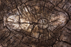 Old tree with a circular from the cracks. texture of an old tree Royalty Free Stock Image