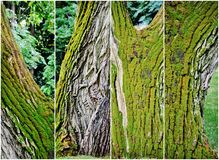 Old Tree collage Royalty Free Stock Images